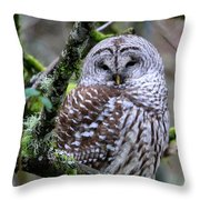 Barred Owl In Tree Throw Pillow