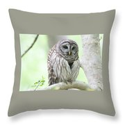 Wings Folded Throw Pillow
