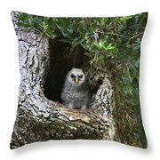 Barred Owlet Throw Pillow