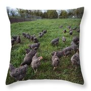 Barred Plymouth Rock Chickens Free Throw Pillow