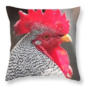 Barred Rock Rooster Throw Pillow