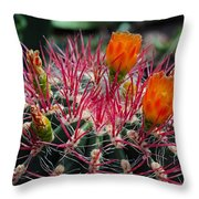 Barrel Cactus II Throw Pillow