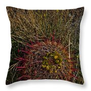 Barrel Cactus Top View Throw Pillow