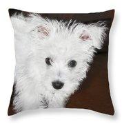 Bashful Puppy Throw Pillow