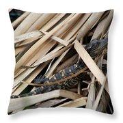 Basking Baby Throw Pillow by April Wietrecki Green