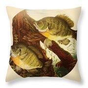 Basking Bluegills Throw Pillow by Bruce Bley