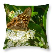 Nature In The Wild - Basking In The Glow Throw Pillow
