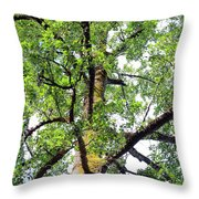 Basking In The Light Of The Lord Throw Pillow