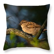 Basking In The Morning Light Throw Pillow
