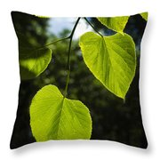 Basswood Leaves Against Dark Forest Background Throw Pillow