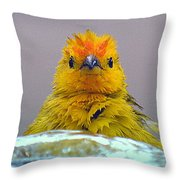 Bath Time Finch Throw Pillow