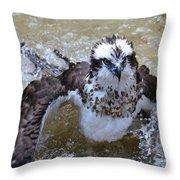 Bathing Osprey Bird Splashing About Throw Pillow