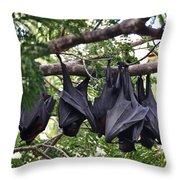Bats Hanging Out Throw Pillow