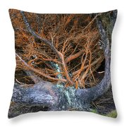 Battered Cypress With Orange Alga Throw Pillow