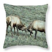 Battling Elk Throw Pillow