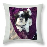Baxter Boo Goes To The Beach Throw Pillow
