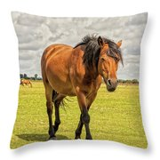 Bay Pony Throw Pillow