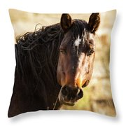 Bay Stallion Of Piceance Basin Throw Pillow