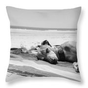 Beach Dreams Are Made Of These In Black And White Throw Pillow