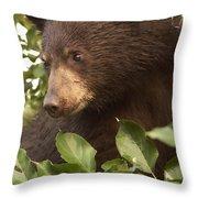 Bear Cub In Apple Tree1 Throw Pillow