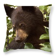 Bear Cub In Apple Tree2 Throw Pillow
