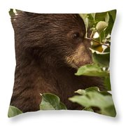 Bear Cub In Apple Tree3 Throw Pillow