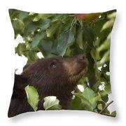Bear Cub In Apple Tree4 Throw Pillow