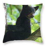 Bear Cub In Tree Throw Pillow