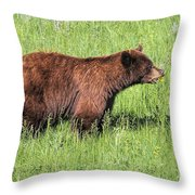 Bear Eating Daisies Throw Pillow