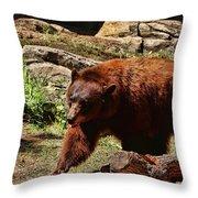 Bear Pacing Throw Pillow