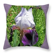 Bearded Iris Blossom Throw Pillow