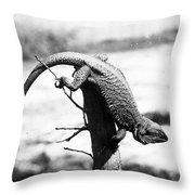 Bearded Lizard Throw Pillow