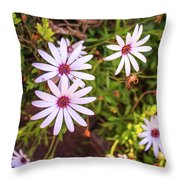 Beautiful African White Daisies Throw Pillow