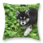 Beautiful Alusky Puppy Peaking Out Of Green Foliage Throw Pillow