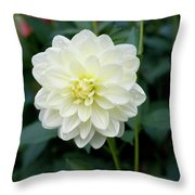 Beautiful And Fresh Dahlias In The Butchrt  Gardens,vancouver Island 3. Throw Pillow