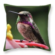 Beautiful Anna's Hummingbird On Perch Throw Pillow