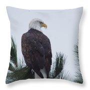 Beautiful Bald Eagle Throw Pillow