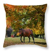 Beautiful Bay Horse In Fall Throw Pillow