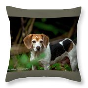 beautiful Beagle Throw Pillow
