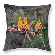 Beautiful Bird Of Paradise Flower In Bloom Throw Pillow