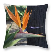 Beautiful Bird Of Paradise Flower In Full Bloom  Throw Pillow