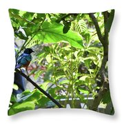 Beautiful Bird Perched In A Tree Throw Pillow