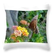 Beautiful Black Swallowtail Butterfly Throw Pillow