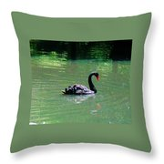 Beautiful Black Swan  Throw Pillow