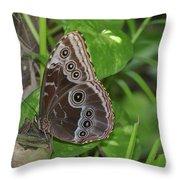 Beautiful Blue Morpho Butterfly Resting In A Garden  Throw Pillow