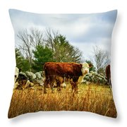 Beautiful Bovine 1 Throw Pillow