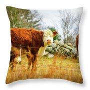 Beautiful Bovine 2 Throw Pillow