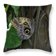Beautiful Brown Morpho Butterfly In A Lush Garden  Throw Pillow