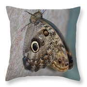 Beautiful Brown Morpho Butterfly Resting In A Butterfly Garden  Throw Pillow