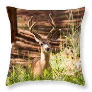 Beautiful Buck Deer In The Pike National Forest Throw Pillow